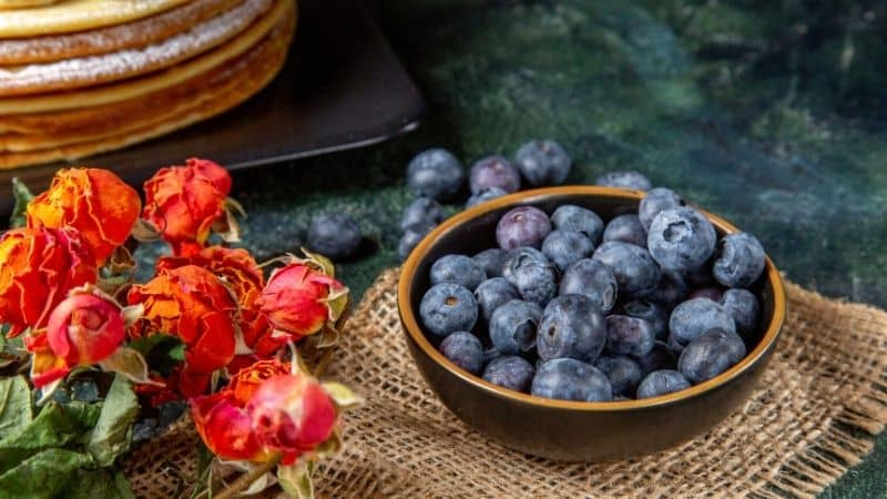 Best Blueberry Brand in India 2021