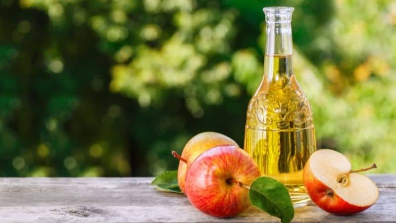 Best Apple Cider Vinegar for Weight Loss in India 2021